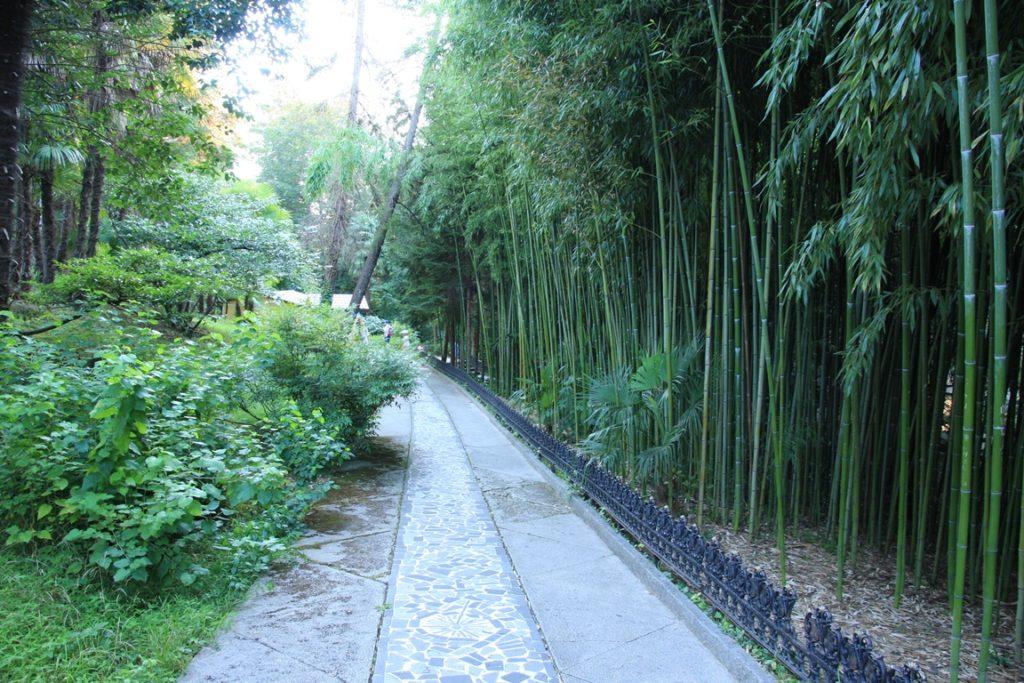 Дендрарий: бамбуковая аллея
