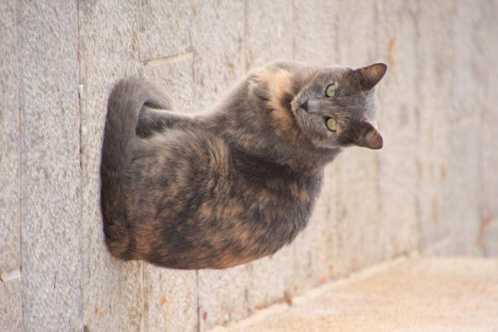 Иерусалимский кот